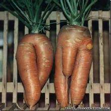 长相奇怪的蔬菜:那些长的像男生鸡鸡的蔬菜,18禁图片!