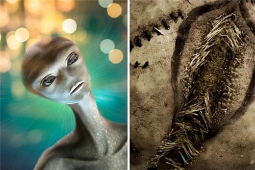 """海边发现大量恐怖的""""异形蛋"""" 犹如电影里的外星生物"""