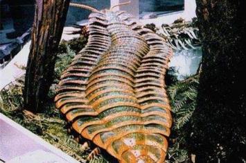 巨型马陆又名千足虫,3米多长有上千条腿是史上最恐怖的虫子