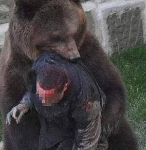 河南野生动物园熊吃人,内脏被掏出营救专家不敢靠近