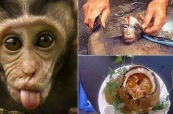 解读生吃猴脑过程照片,活猴头被灌热油脑髓被挖出食用
