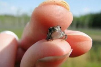 盘点世界上哪十种动物最小,世界上最小的动物排名(比蚂蚁还小)