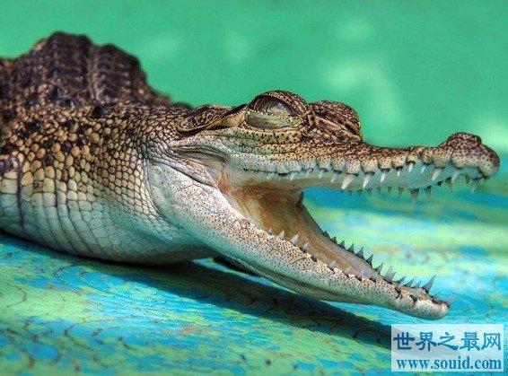 11岁女孩斗鳄鱼 骑背抠眼从鳄鱼嘴中救小伙伴