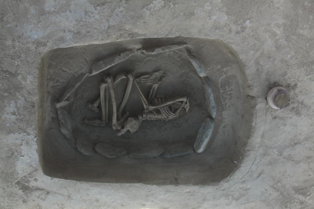 新疆阜康白杨河流域发现大型墓群  第6张