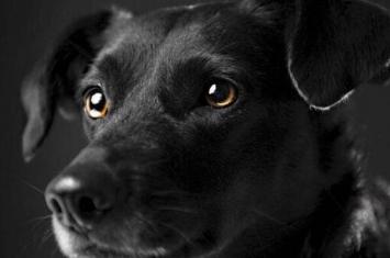狗真能看见人看不见的东西吗,为何深夜会对着空气狂叫?