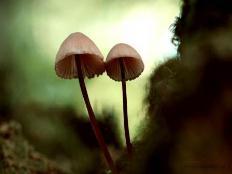 蘑菇定律是什么意思,新人不被重用还可能背锅(每人必经阶段)