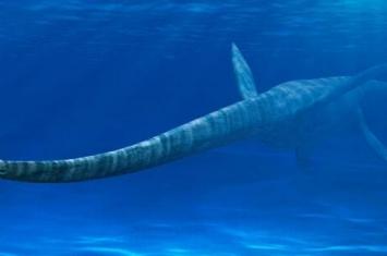 水中的恐龙有哪些?生活在水中的恐龙十大排名
