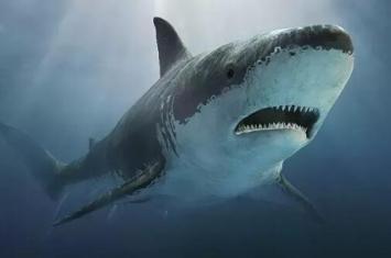 1993深圳鲨鱼吃人事件,大学生被鲨鱼吃的连尸体都找不到
