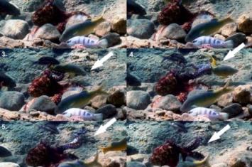 章鱼可能不是地球生物,研究发现章鱼比人类还聪明