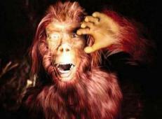 神龙架真的有野人吗,揭秘神农架野人之谜(应是棕熊)