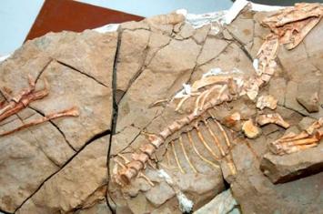 恐龙化石的主要遗址