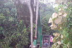 辽宁挖出140岁蛇精,体长16米挖掘司机当场被吓死