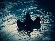 凶残水鬼是什么,拉人下水找替身的水猴子真实身份揭秘