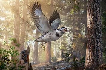 河北省早白垩世大北沟组发现一原始鸟类:迷惑巾帼鸟
