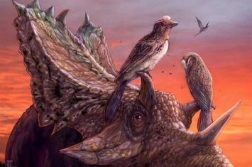 最完整北美洲反鸟类化石Mirarce eatoni竟藏在博物馆26年没人发现?
