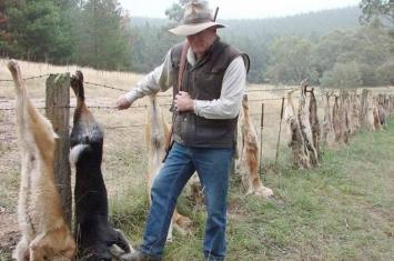 澳大利亚农民大量猎杀野狗 并将其挂在村里的树上以儆效尤