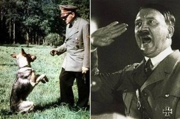 德国纳粹二战期间曾训练狗讲话阅读和拼写