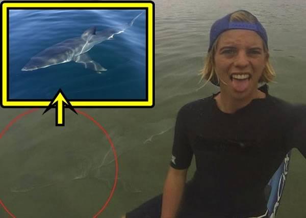 """澳洲冲浪少年Alex Hayes晒""""鲨""""胆自拍 鲨鱼竟与资料图一样"""