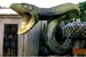贵州挖出4吨大蛇后放生,中央下令封闭山洞大蛇消息(却遭蛇报复)