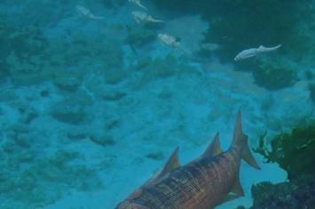 3亿年前的古鱼类为什么要爬向陆地
