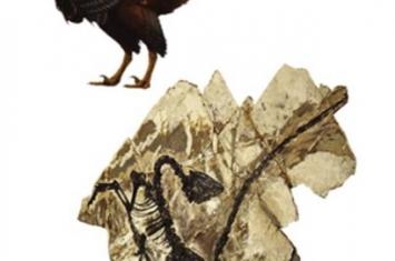 在大连星海古生物化石博物馆诞生世界首张恐龙彩色写真