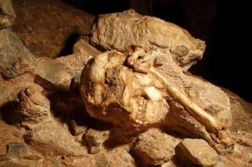 """新研究称南非斯泰克方丹洞穴中发现的367万前""""小脚丫""""属于普罗米修斯南猿"""