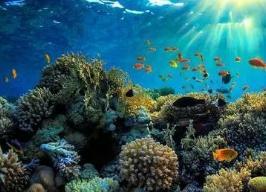 世界上最大的珊瑚礁,澳大利亚大堡礁是全球求婚成功率最高的地方