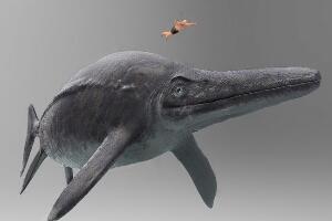 史前最大的动物第一名,新西兰大鱼龙(体长38米重311吨)