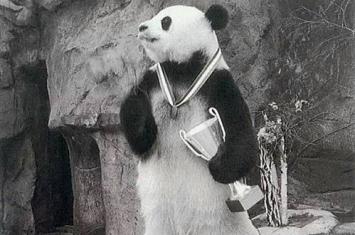 上春晚的大熊猫叫什么