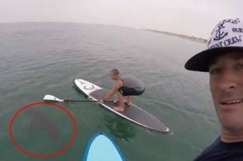 美国加州出现10数条年幼大白鲨 冲浪客不怕危险主动接近