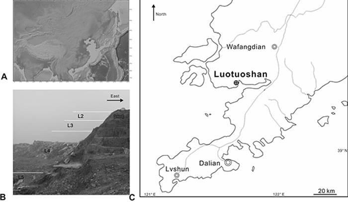 东亚地区首次发现海獭貂的头骨揭示欧亚大陆在中更新世转型期的大量生物交流