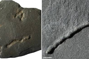 加蓬采石场21亿年前黑色页岩化石中发现地球上出现能移动生物体的最早证据