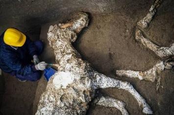 意大利庞贝古城出土近2000年古罗马战驹 遗骸完整石化极为罕见