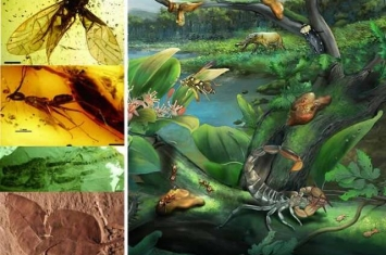 漳浦生物群是物种极其丰富的热带雨林化石库:世界四大琥珀生物群之一