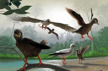 产自热河生物群的白垩纪古喙鸟揭示鸟类演化重要阶段