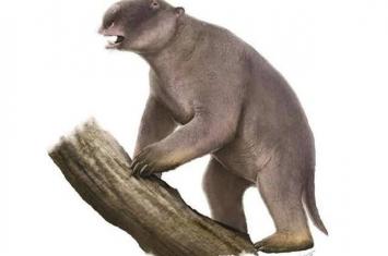地球远古时期的巨型动物灭绝与它们的体形有关吗?