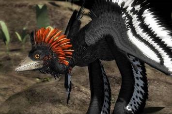 羽毛分子演化的化石直接证据:侏罗纪近鸟龙不会飞