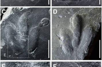 韩国最袖珍恐龙足迹化石上留有皮肤印痕