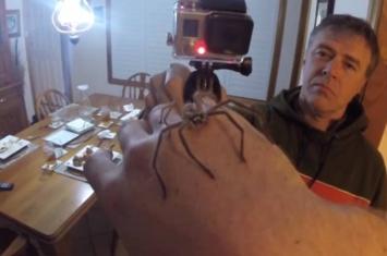 澳大利亚男子展示如何用双手操纵巨型猎人蜘蛛