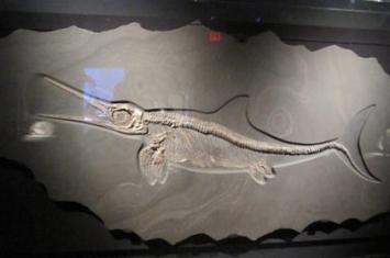 古生物化石是什么岩石