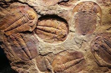 三叶虫化石是什么时代的