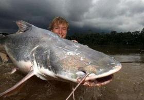 凶猛淡水鱼,亚马逊鲶鱼号称世界凶猛淡水鱼