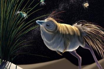 小型兽脚亚目Shuvuuia:能在完全黑暗的环境中捕食的奇特恐龙