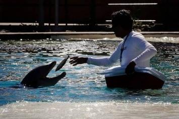 美国亚利桑那州凤凰城沙漠的海豚公园开业2年已有4条海豚死亡 闭馆查死因