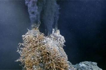 生活在450度海底热泉旁的虾它们煮不熟吗