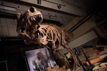 """28年前在加拿大发现的恐龙化石""""Scotty""""被证明是世界上最大的霸王龙化石"""