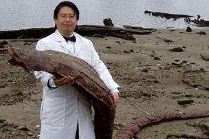 日本海岸发现不明生物,疑似核泄漏后的变异体(外形怪异吓人)