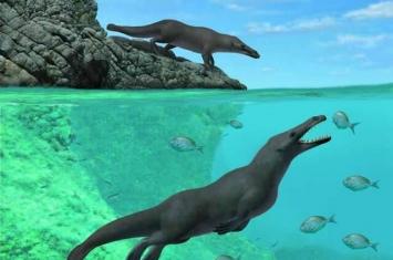 """鲸鱼的祖先4300万年前""""四足鲸""""化石现身秘鲁 有蹼和蹄还能在陆地行走"""