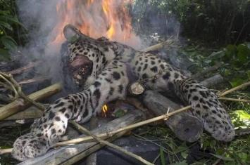 印度豹袭击伤5人 村民乱棍打死烧尸