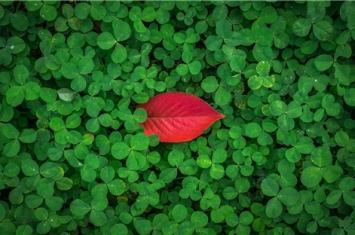 植物神秘的心灵感应